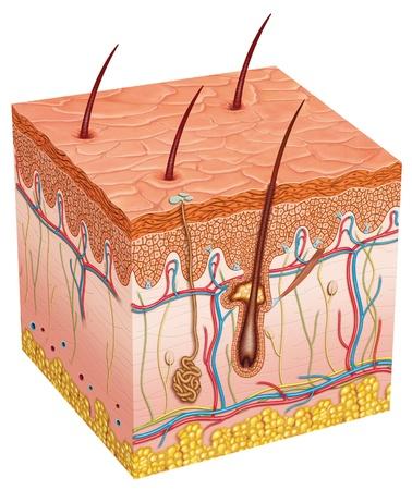 Reife Haut