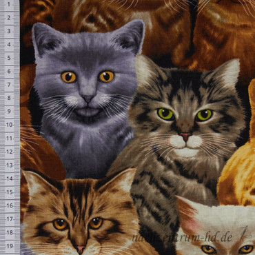 Timeless Treasures Cats Allover – Bild 2