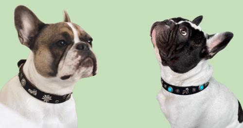 Hundehalsbänder & Leinen Frühling 2021