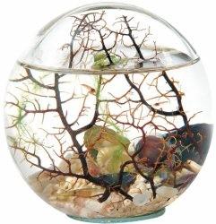 Beachworld 20cm Kugel mit Gorgonie geschlossenes Miniaquarium