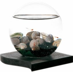 Beachworld 12,5cm Collection Black & White Sand Black Base