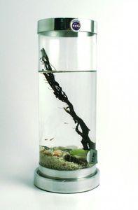 BioGlobe Ökosystem Limited Edition Zylinder