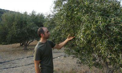 GU Sitia 0.3 Extra Natives Olivenöl Lantzanakis im Kanister 5L aus Kreta Premium Quality Extra – Bild 2