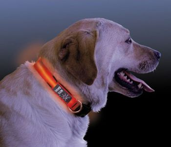 LED Hundehalsband LED Collar Leuchthalsband orange - in drei Größen (S-L) – Bild 3