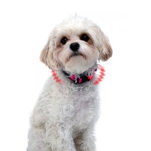 LED Hundehalsband  XS - in zwei Farben    – Bild 3