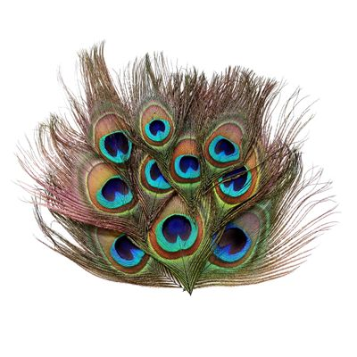 10 Natur-Pfauenfedern, Pfauenaugen 10 - 18 cm Feder Pfau Pfauenauge