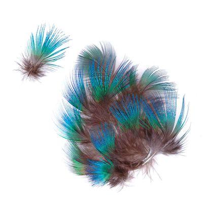 10 Natur-Pfauenfedern, 3 - 7 cm