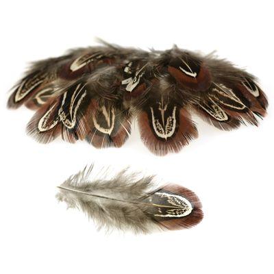 20 Hühnerfedern f. Federkostüm ca. 4~8x1~2cm gefärbt, braun