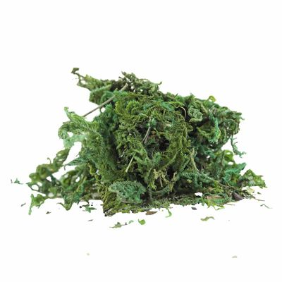1 Pack / 45 - 50g natürliches Deko-Moos, grün Floristik Krippenbau Modellbau – Bild 1