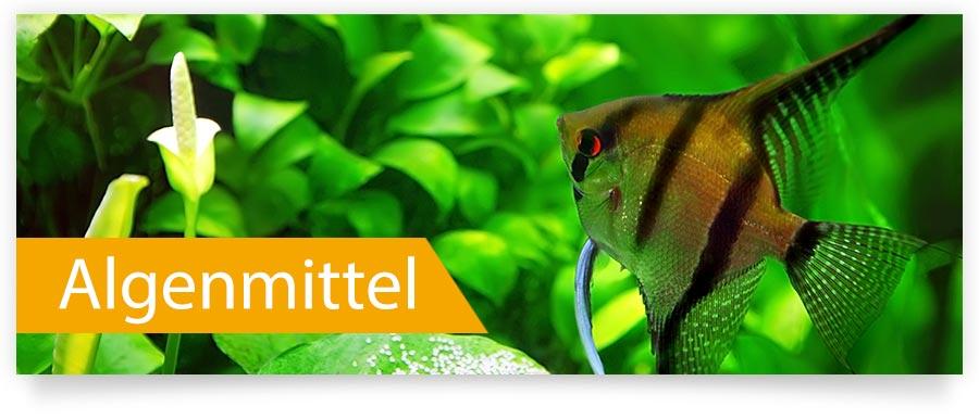 Algenmittel, Algenvernichter, Algenkiller für Ihr Aquarium jetzt auf Zoofux.de