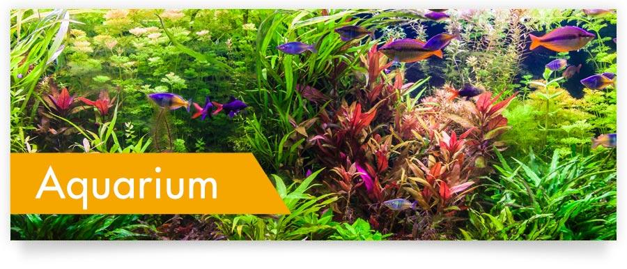 Pflegemittel und Produkte für Ihr Aquarium - Jetzt auf Zoofux.de