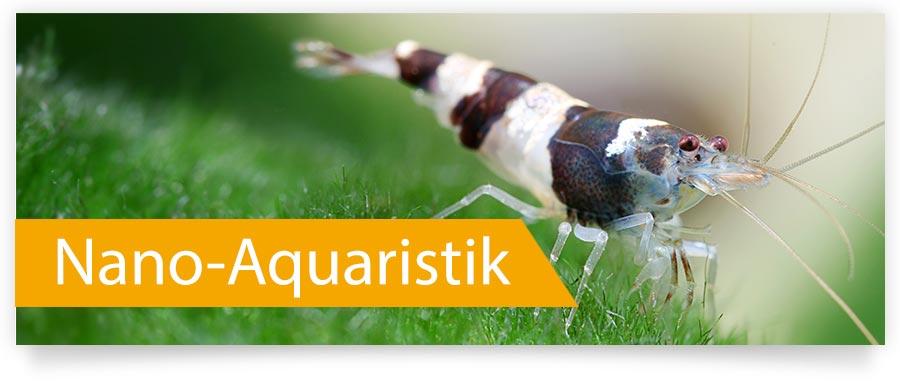 Nano-Aquaristik jetzt für Ihr Aquarium - Garnelen und Wirbellose jetzt auf Zoofux.de
