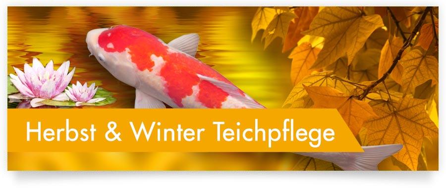 Herbst- und Winterpflege für Ihren Gartenteich