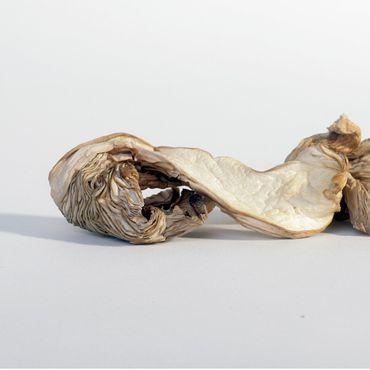 Austernpilze getrocknet BIO – Bild 5