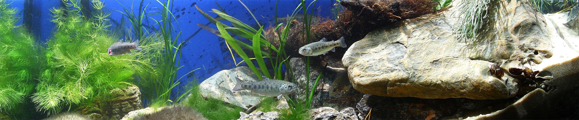 Aquaristik
