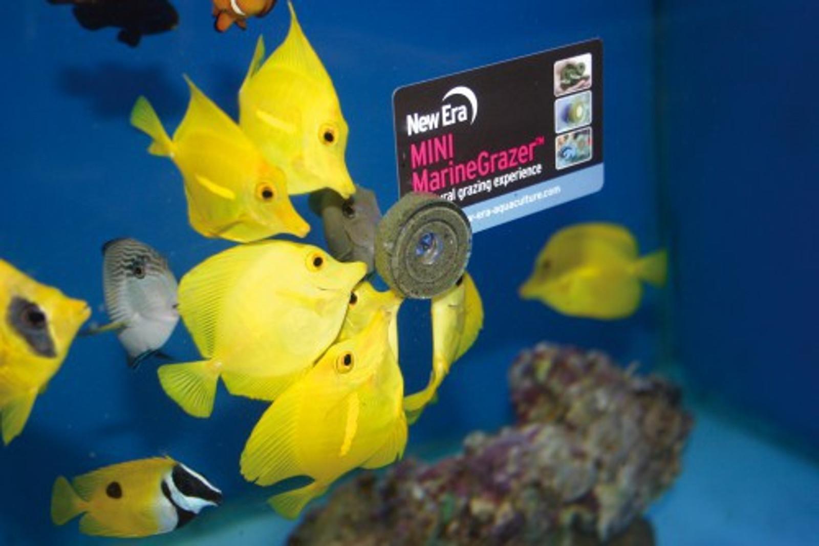 vitalis Marine Grazer 110 g, ca. 26 Stk. inkl. Saugnapf für Meerwasserfische – Bild 4