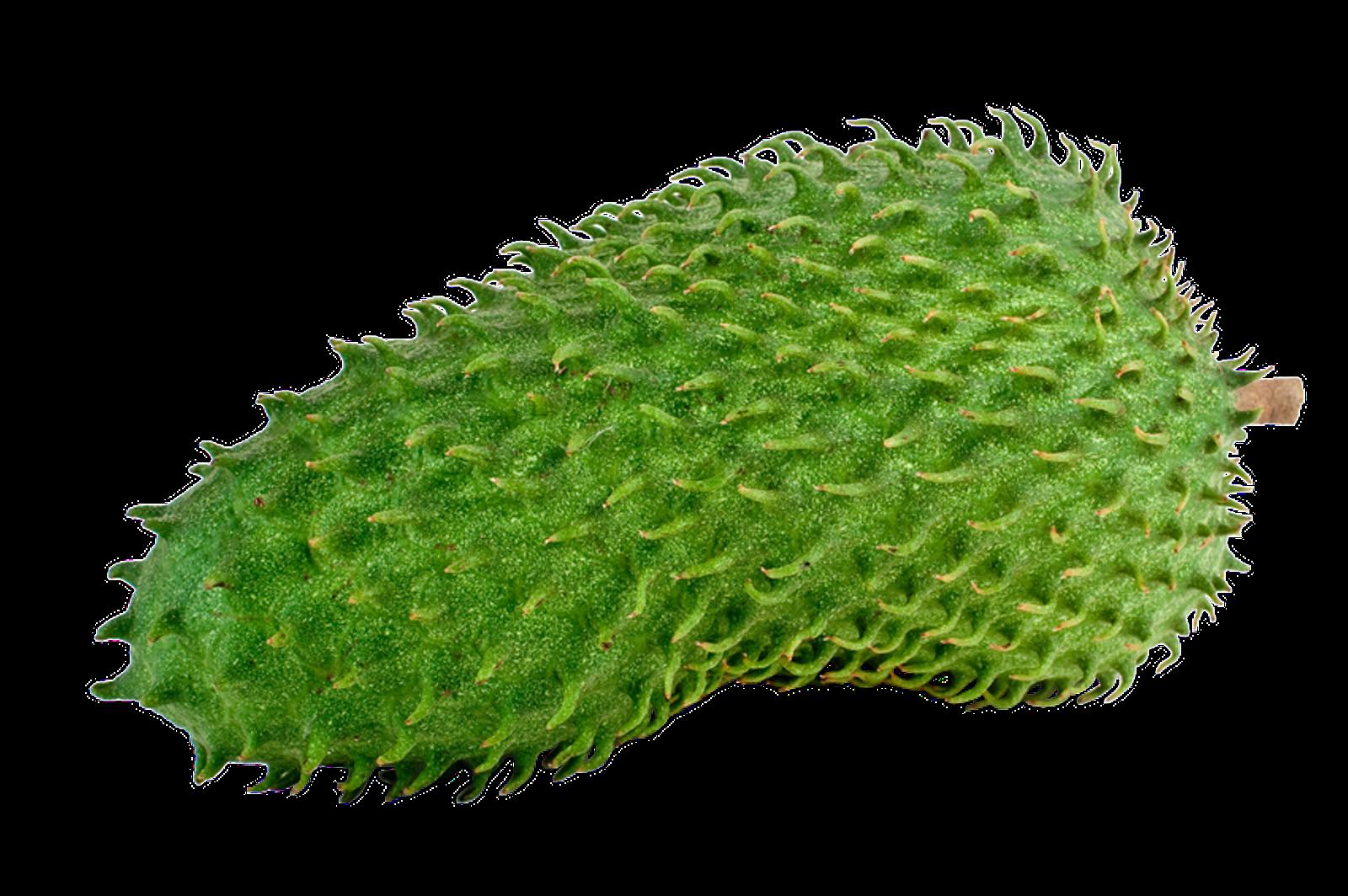 Stachelannone Graviola Frucht Püree tiefgefroren, 4 kg (40 Portionen á 100g)