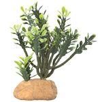 Hobby Euphorbia Kaktus