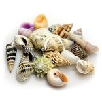Hobby Sea Shells Set