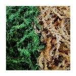 Dragon Natural Green Sphagnum-Moos