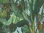 Tapete AS Creation Decora Natur 6 Dschungel grün blau 959898-1 2