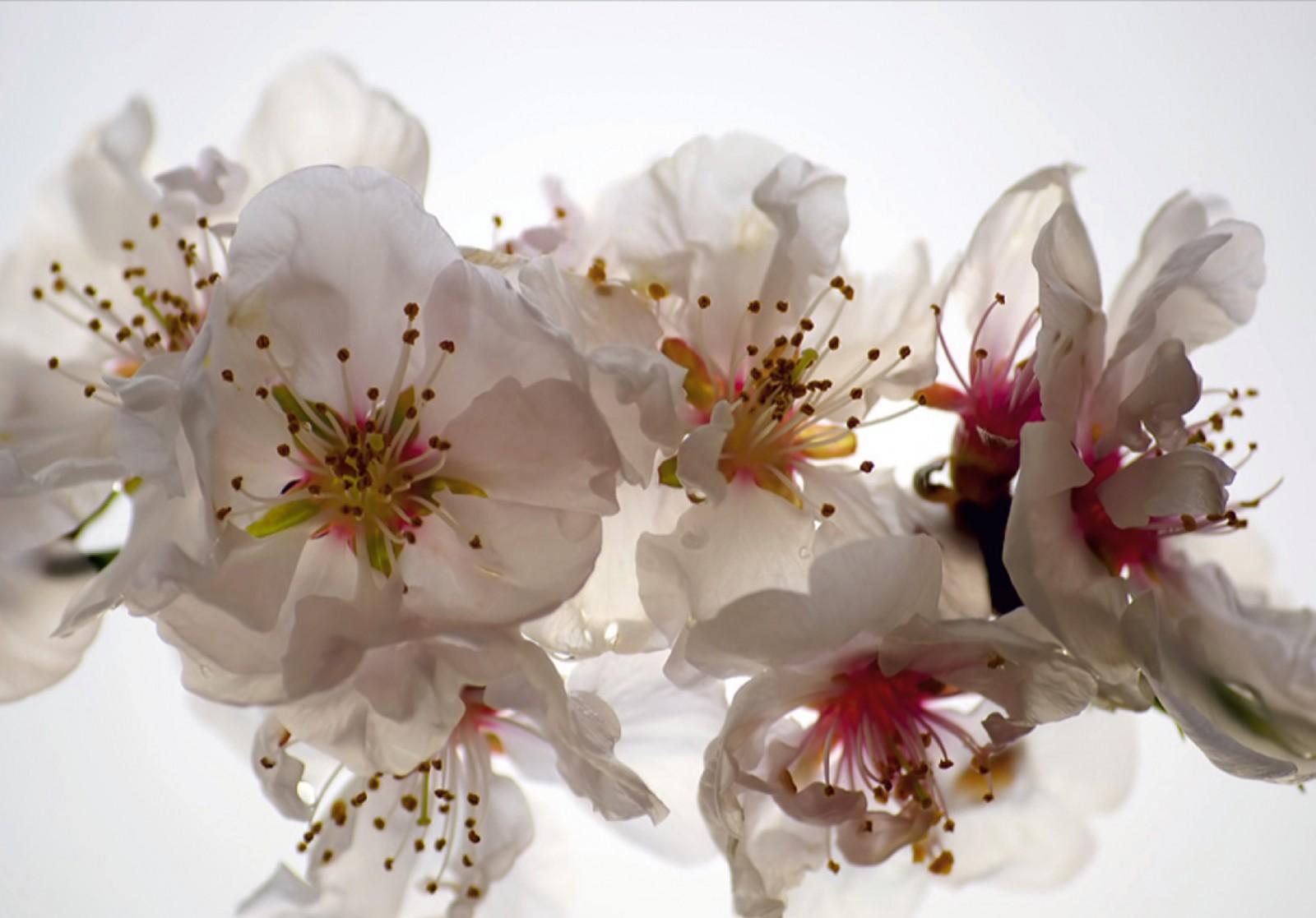 xl fototapete tapete blumen bl ten floral natur. Black Bedroom Furniture Sets. Home Design Ideas