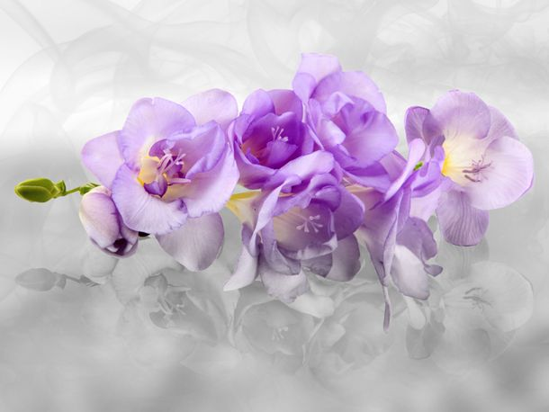 XL Fototapete Tapete Orchideen Blumen Blüten 3D online kaufen