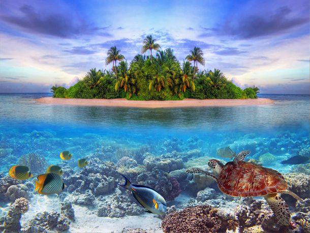 XL Fototapete Tapete Insel Sand Insel Meer Palmen online kaufen