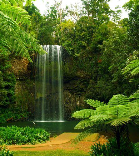 Fototapete Tapete Wasserfall Natur Bäume 180x202cm online kaufen