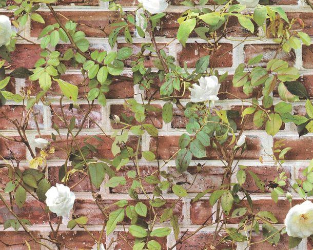 Tapete Mauer Rosen Ranke Floral braunrot grün 36572-1 online kaufen