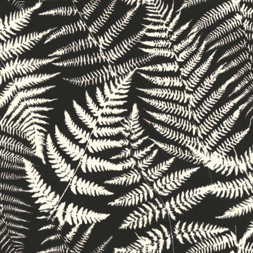 Vliestapete Blätter Negativ Farn schwarz weiß 139001
