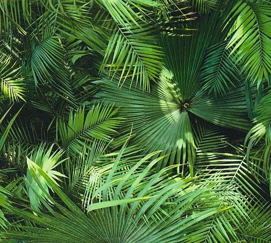 Tapete Selbstklebend grün Dschungel Farnblätter 368441