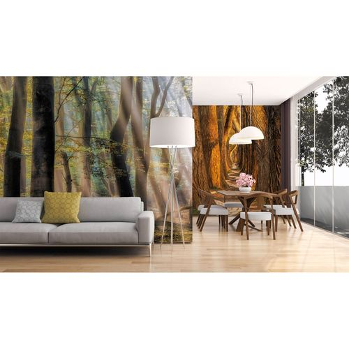 Premium Fototapete Vlies Wald Bäume Weg braun orange