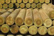 Palisaden aus Holz zum Eingraben