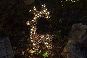 Rentier beleuchtet im Garten