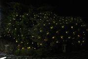 Lichternetz im Garten Weihnachten