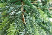 B-Ware - Künstlicher Weihnachtsbaum 150 cm BonTree Fichte PE/PVC-Mix