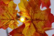 Lichterbaum mit LED und Ahorn-Blätter
