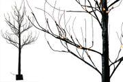 Lichterbaum schwarz, 200 cm hoch