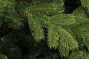 Spritzguss-Nadeln des Sherwood-Baums