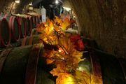 Girlande beleuchtet im Weinambiente