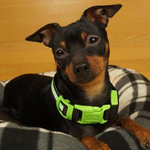MAILUX LED Hundehalsband grün Gr M 7-15Kg versch. Leuchtmodi – Bild 2