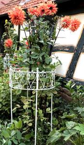Rankgitter Pflanzenhalter Rankhilfe Staudenhalter  Riviera 60 Dahlie  Weiss  – Bild 1