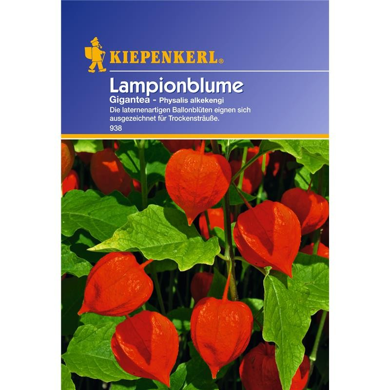 kiepenkerl lampionblume physalis gigantea garten s mereien blumen mehrj hrige blumen sonstige. Black Bedroom Furniture Sets. Home Design Ideas