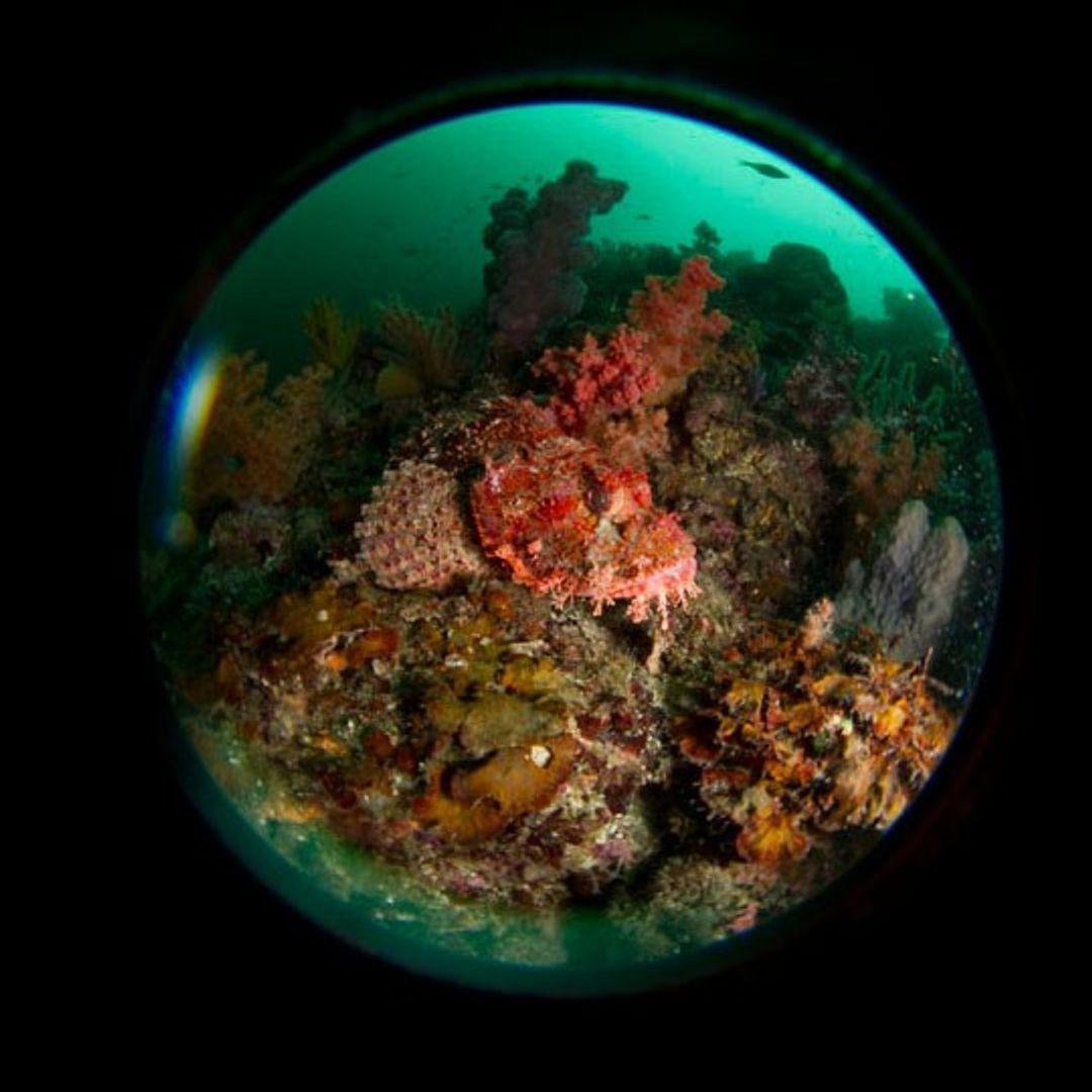 INON UFL-M150 ZM80 Underwater Micro Fisheye Objektiv – Bild 2