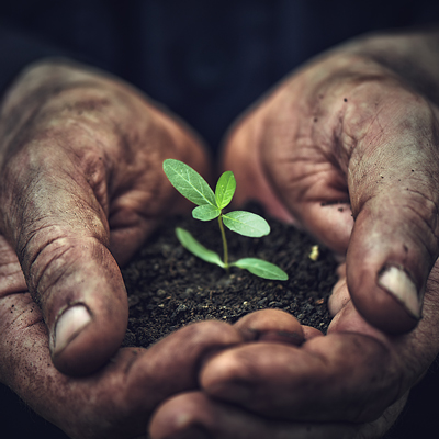 Hand mit Pflanze und Erde