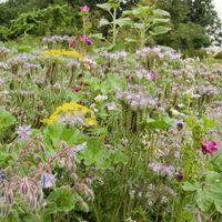 Blumenmischung Insektenbuffet - Samen