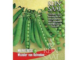 Markerbse Wunder von Kelvedon - Samen - Bio