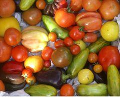 Tomatensamenpaket 2019