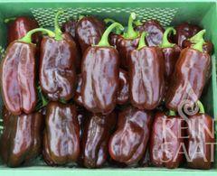 Paprika Sweet Chocolate - Samen -